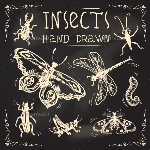 GraphicRiver Insects Sketch Set 9404434