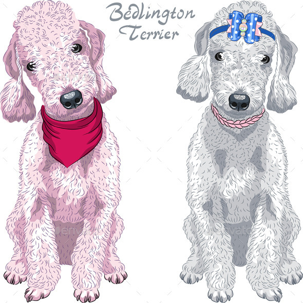 GraphicRiver Bedlington Terrier Breed 9409200