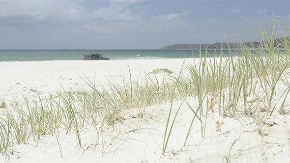 Beach Grass 4WD