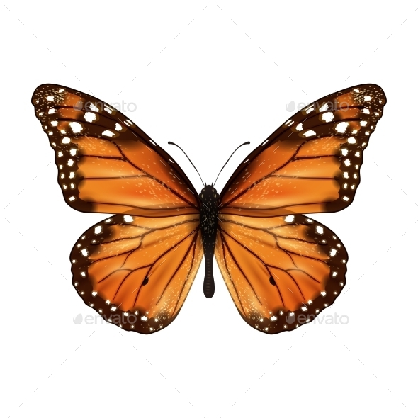 GraphicRiver Butterfly Realistic Isolated 9413779
