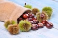 Chestnuts. - PhotoDune Item for Sale