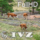 Grazed Cows - VideoHive Item for Sale