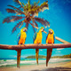 Parrots Blue-and-Yellow Macaw on beach - PhotoDune Item for Sale