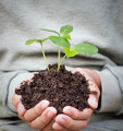 young  boy hands hold plant