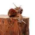 Three snails on pine tree stump - PhotoDune Item for Sale