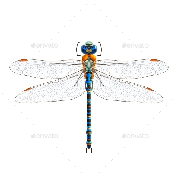 GraphicRiver Dragonfly 9429484