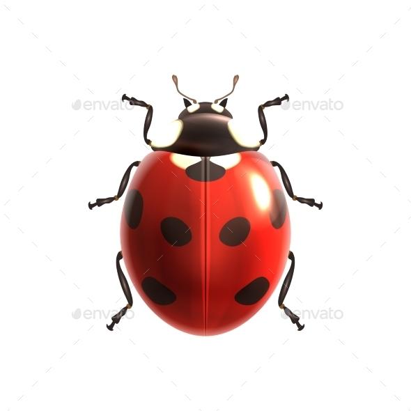 GraphicRiver Ladybug 9429534
