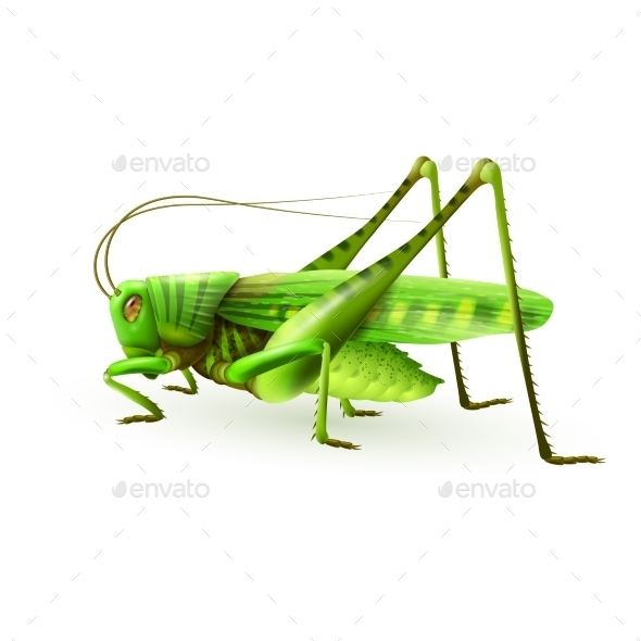GraphicRiver Grasshopper 9429592