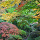 Stone Lantern Among Japanese Maple Trees - PhotoDune Item for Sale