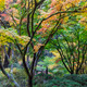Fall Colors at Japanese Garden - PhotoDune Item for Sale