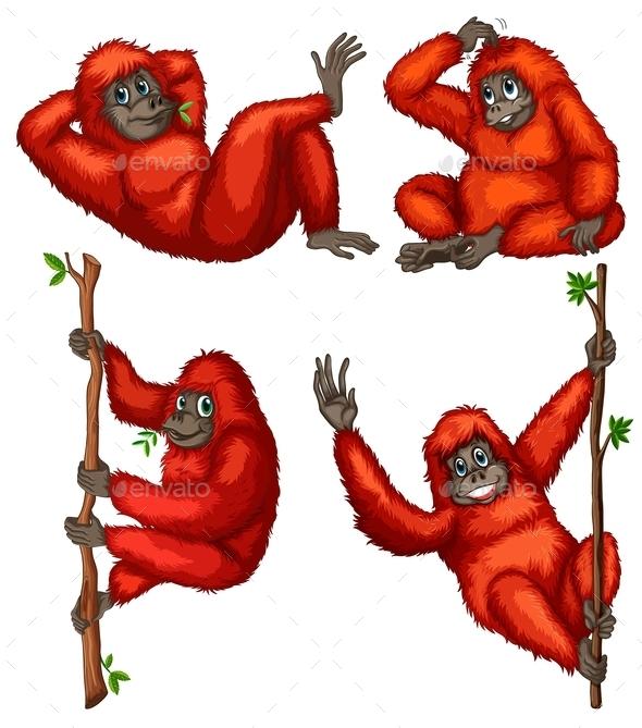 GraphicRiver Orangutans 9436557