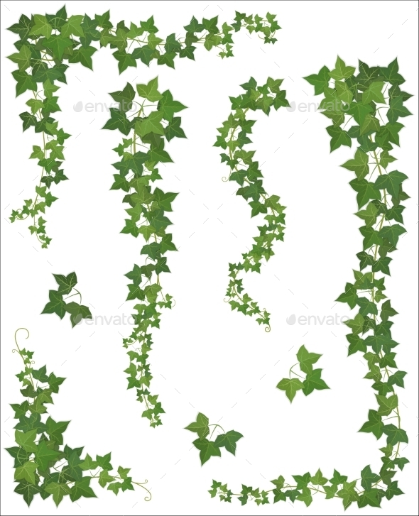 GraphicRiver Ivy Branches 9445242