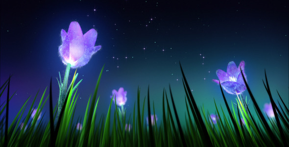 Night Flowers By Spc01 Videohive
