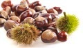Isolated chestnuts. - PhotoDune Item for Sale