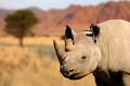 Black rhinoceros - PhotoDune Item for Sale