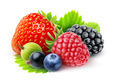 Fresh berries - PhotoDune Item for Sale