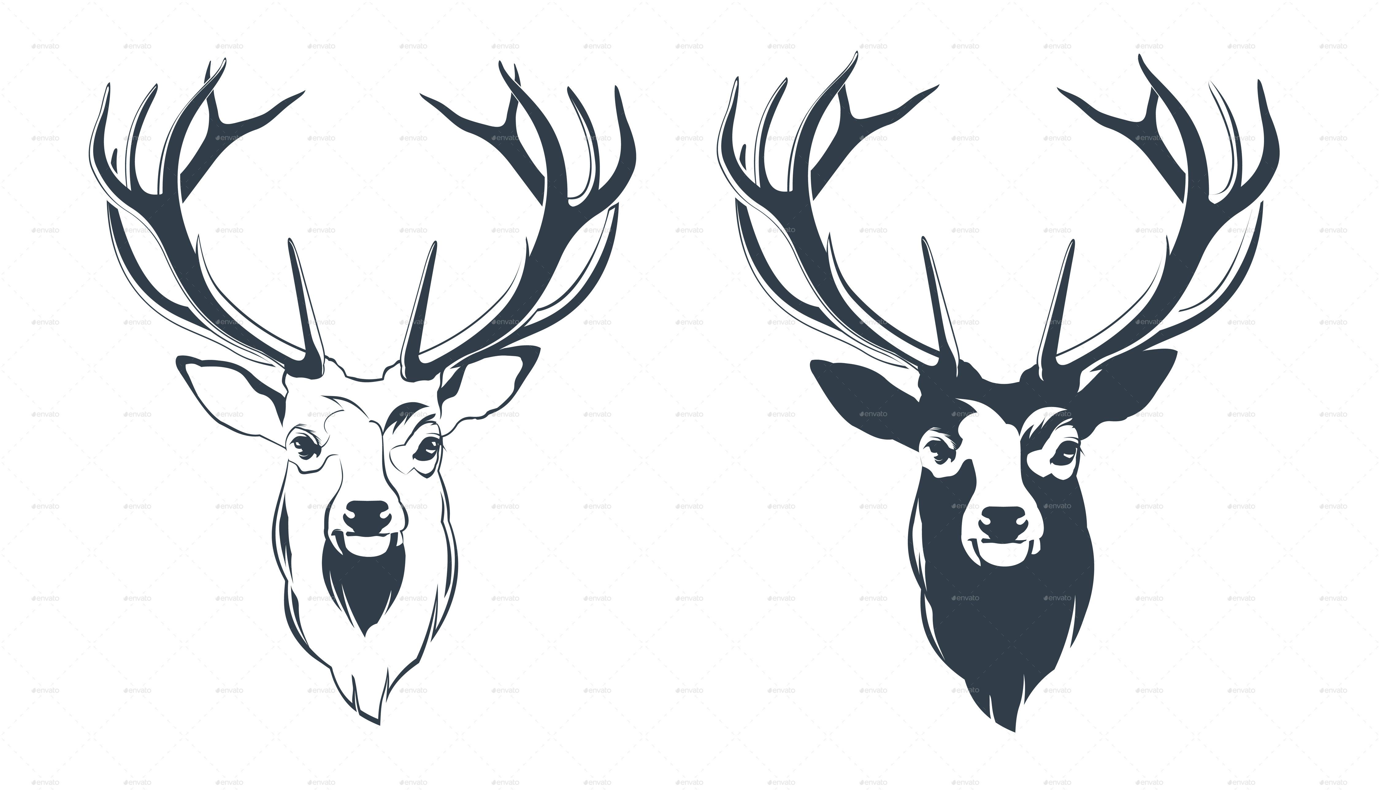 ... Male Red Deer Head.jpg Vector Illustration of a Male Red Deer Head.png