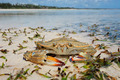 Crab on beach - PhotoDune Item for Sale