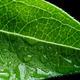 Zinnia Leaf Detail - PhotoDune Item for Sale