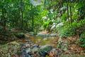 tropical jungles - PhotoDune Item for Sale