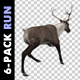 Reindeer - Run - Pack of 6 - VideoHive Item for Sale