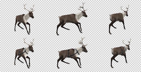 Reindeer Run Pack of 6