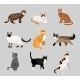 Set of Cartoon Kitties or Cats - GraphicRiver Item for Sale