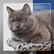 Cat On Transparent Background - VideoHive Item for Sale