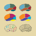 abstract brain symbol set - PhotoDune Item for Sale