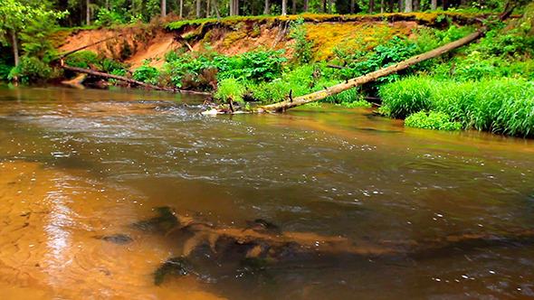 VideoHive River with lear Water 9477216