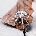 Big Orb spider on the leaf - PhotoDune Item for Sale