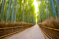 Kyoto, Japan Bamboo Forest - PhotoDune Item for Sale