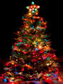 Snow Covered Christmas Tree with Multi Colored Lights - PhotoDune Item for Sale