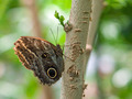 Butterfly on a Plants in a Garden - PhotoDune Item for Sale