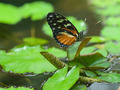 Butterfly on a Leaf in a Garden Pond - PhotoDune Item for Sale
