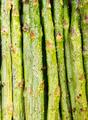 Grilled Asparagus - PhotoDune Item for Sale