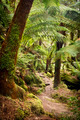 Otways National Park - PhotoDune Item for Sale