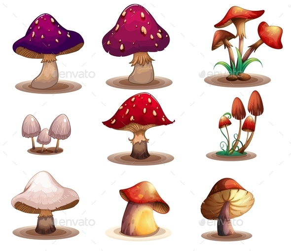 GraphicRiver Different Kinds of Mushrooms 9482235