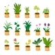 Plant Collection - GraphicRiver Item for Sale