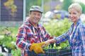 Offering seedlings - PhotoDune Item for Sale