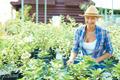 Gardening - PhotoDune Item for Sale