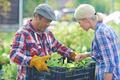 Fresh seedlings - PhotoDune Item for Sale
