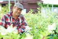 Mature gardener - PhotoDune Item for Sale