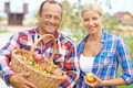 Harvest of apples - PhotoDune Item for Sale