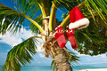 Beach with palm tree at christmas - PhotoDune Item for Sale