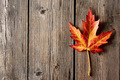 Autumn maple leaf over wooden background - PhotoDune Item for Sale