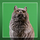 Cat On Green Background - VideoHive Item for Sale