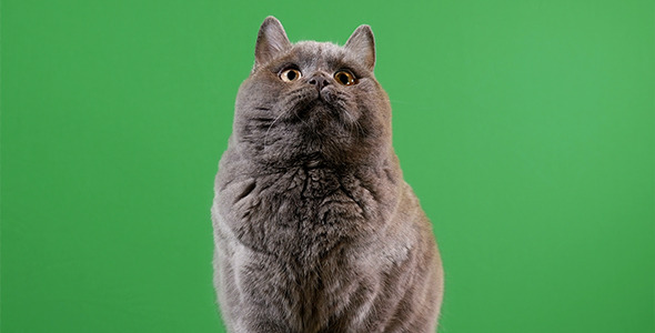 Cat On Green Background