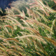 Flower grass field background - PhotoDune Item for Sale