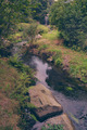 River in Park - PhotoDune Item for Sale